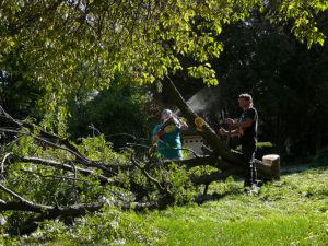 tree removal laws Adelaide